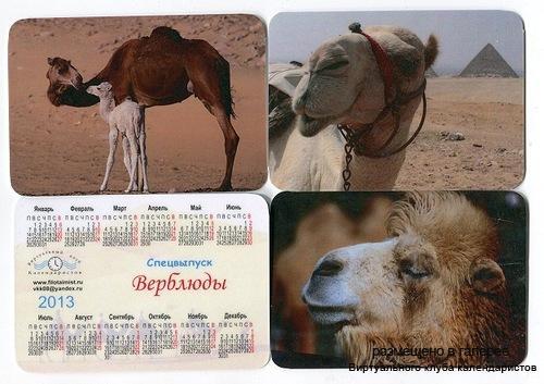 Серия календарей «Верблюды» 12 штук 2013 год