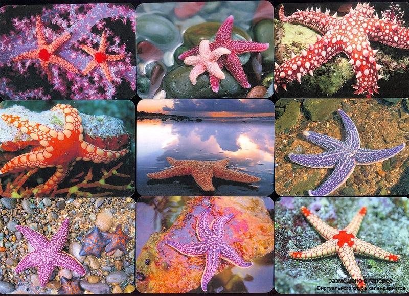 Серия календарей «Морские звезды» 12 штук 2012 год