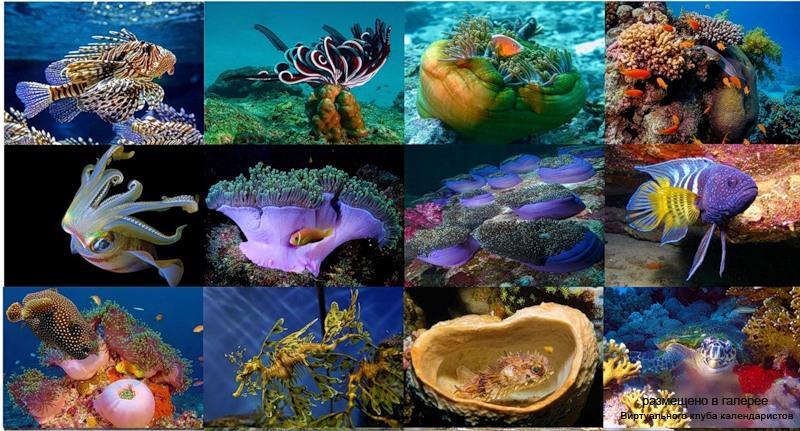 Серия календарей «Подводный мир» 12 штук 2011 год