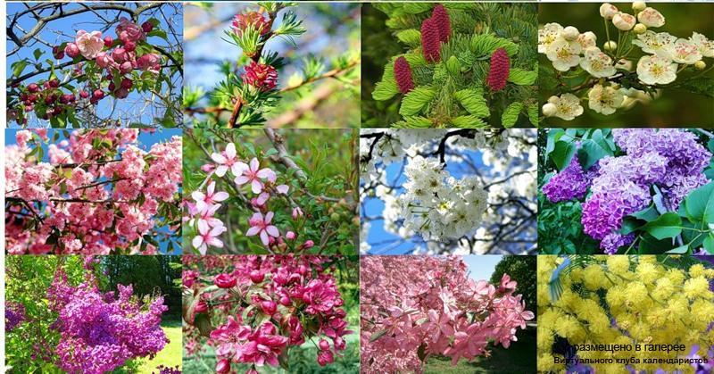 Серия календарей «Сады цветут» 12 штук 2011 год
