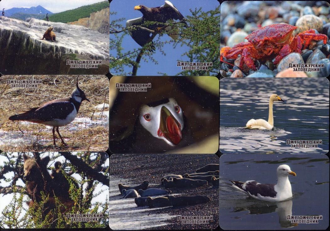 Серия календарей «Джугджурский заповедник фауна» 22 штуки 2020 год