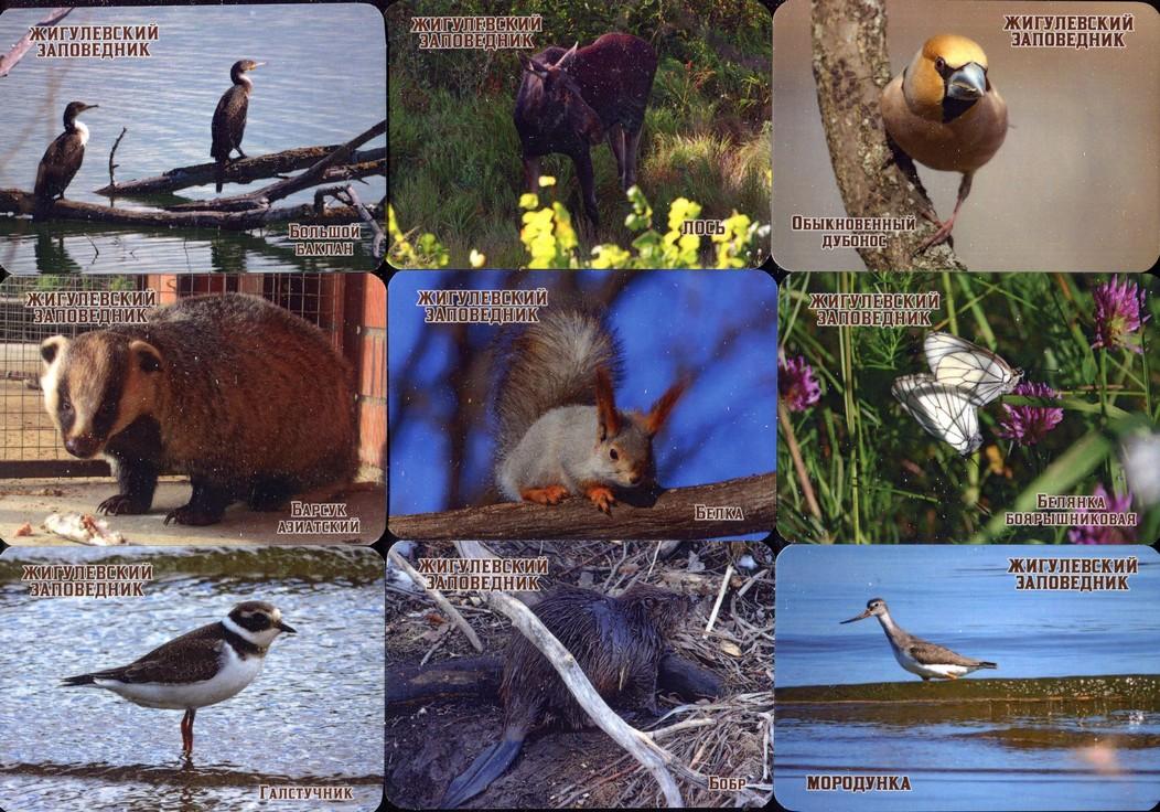 Серия календарей «Жигулевский заповедник фауна» 24 штуки 2020 год