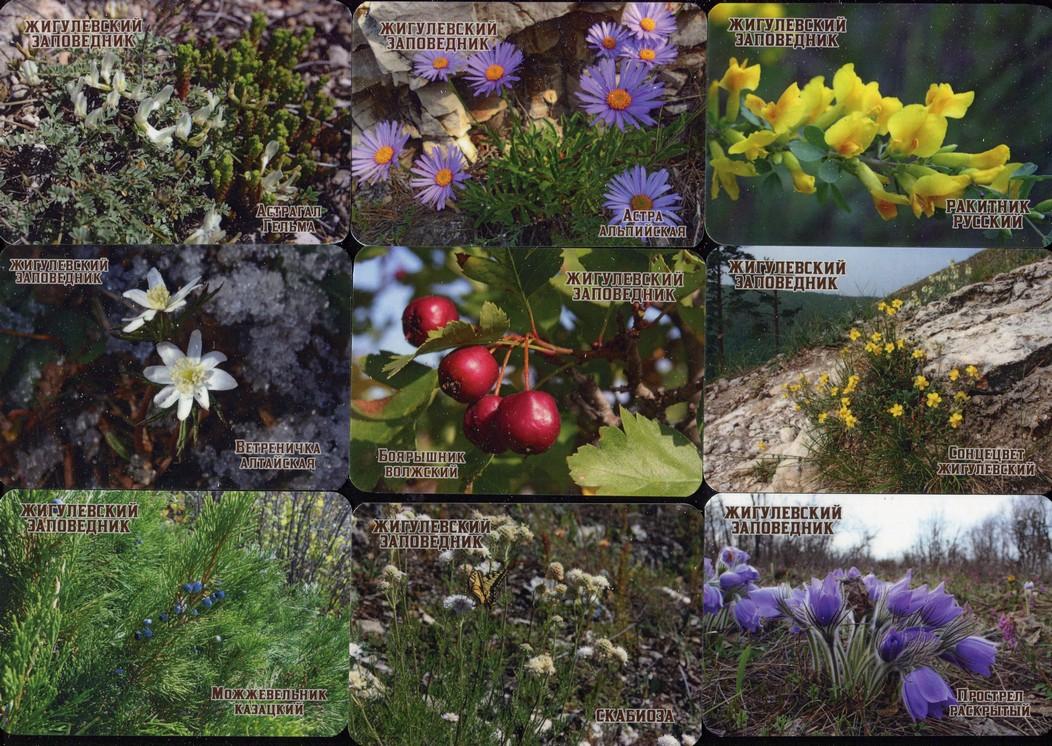 Серия календарей «Жигулевский заповедник флора» 22 штуки 2020 год