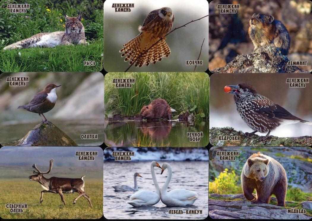 Серия календарей «Заповедник Денежкин камень фауна» 22 штуки 2020 год