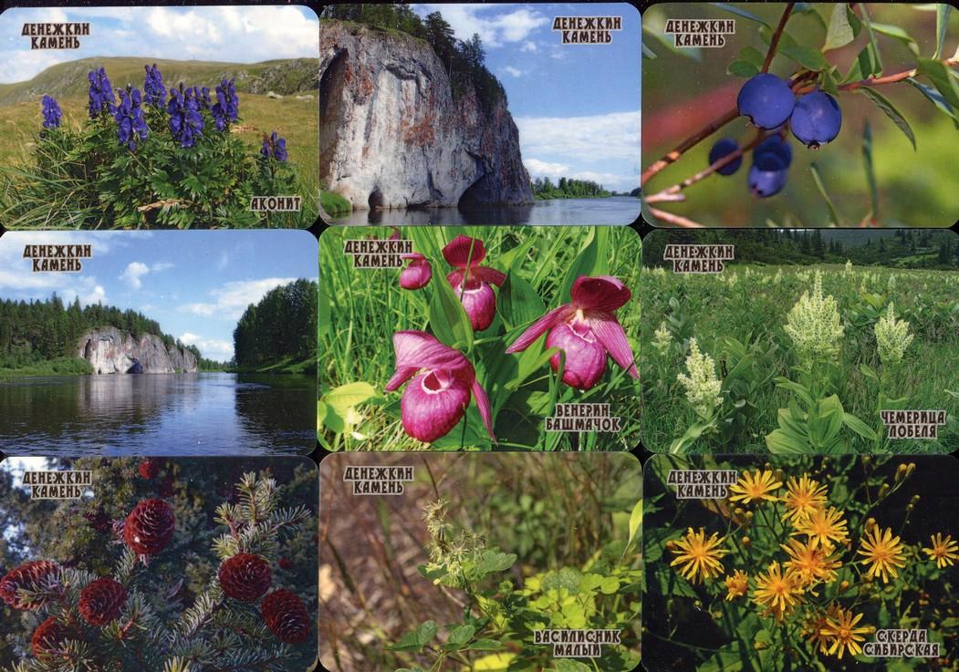 Серия календарей «Заповедник Денежкин камень флора» 22 штуки 2020 год