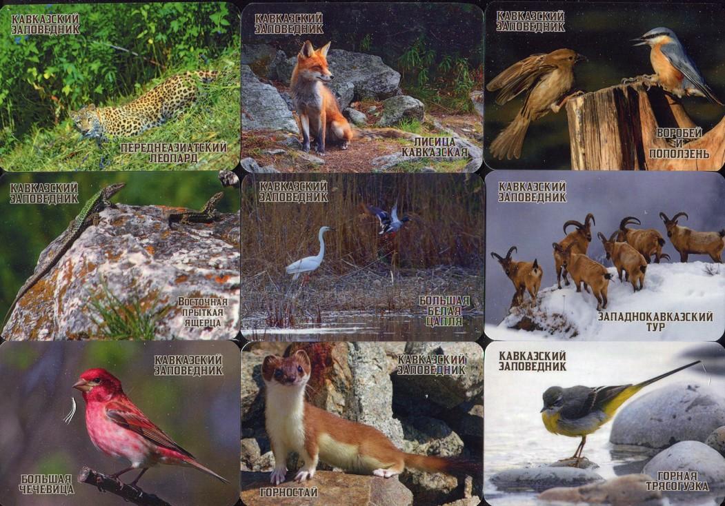 Серия календарей «Кавказский заповедник фауна» 22 штуки 2020 год