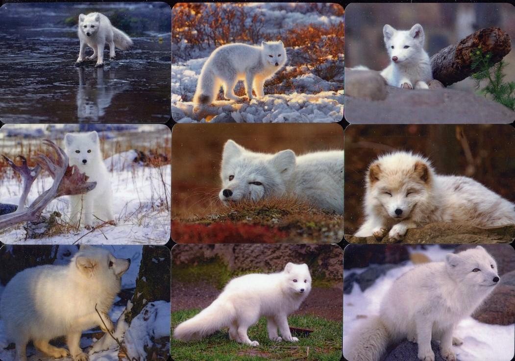 Серия календарей «Полярная лисица» 22 штуки 2020 год