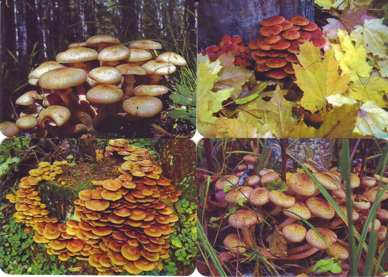 карманный календарь грибы